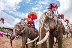 SURIN, TAILANDIA - 16 MAGGIO: Parata di classificazione sulla F posteriore dell'elefante Fotografie Stock