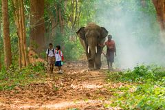 Mahout and students in uniform walking together with elephant on. Surin, Thailand - June 25, 2016: Mahout and students in uniform walking together with elephant royalty free stock photo