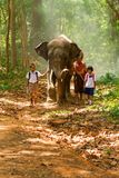Mahout and students in uniform walking together with elephant on. Surin, Thailand - June 25, 2016: Mahout and students in uniform walking together with elephant royalty free stock photography