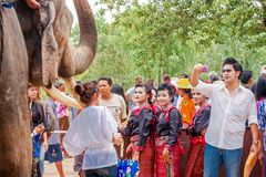 SURIN,THAILAND-MAY 16 :Unidentified group of pretty dancer and t. Raveller near a elephant in Ordination Parade on Elephants Back Festival at Wat Chang Sawang on stock image