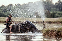 SURIN, THAILAND - November 19,2016; Elefanten, die ein Bad mit nehmen Lizenzfreie Stockfotografie