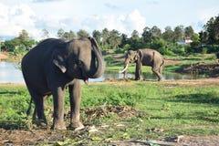 Surin van Thailand Stock Afbeeldingen