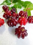 Surinam cherry (Eugenia uniflora) Stock Photo