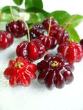 Surinam cherry (Eugenia uniflora) Stock Photos