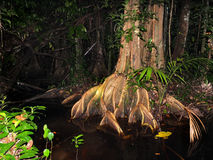 Surinam rainforest at night