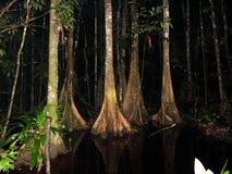 Surinam-Regenwald nachts Lizenzfreie Stockfotos