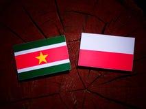 Suriname flag with Polish flag on a tree stump isolated. Suriname flag with Polish flag on a tree stump royalty free illustration