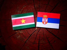 Suriname flag with Serbian flag on a tree stump isolated. Suriname flag with Serbian flag on a tree stump stock images