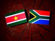 Suriname flaga z południe - afrykanin flaga na drzewnym fiszorku odizolowywającym Zdjęcie Stock