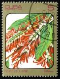 Surinamensis de Triplaris, série de fleurs d'images du Carib, cercle Image stock