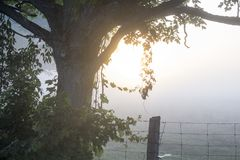 Surise de début de la matinée au-dessus d'une ferme avec le soleil coulant par le brouillard Image libre de droits