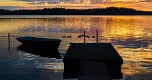 Sunrise on the lake. Little ducks are having breakfast. royalty free stock photography
