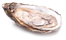 Surowa ostryga na bielu obraz stock