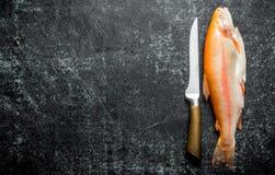 Surowa pstrąg ryba z nożem obraz stock