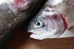 Surowa ryba Dla przygotowania Zdjęcia Royalty Free