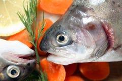 Surowa ryba Dla przygotowania Fotografia Stock