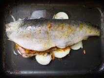 Surowa ryba na wypiekowym prześcieradle Kulinarny cały piec rybi seriola z cytryną piec w piekarniku Szef kuchni stawia wypiekowe obrazy stock