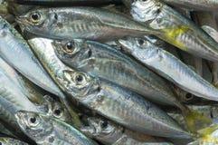 Surowa ryba nad naturalnym drewnianym tłem (scad) obrazy royalty free