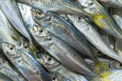 Surowa ryba nad naturalnym drewnianym tłem (scad) obrazy stock