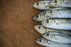 Surowa ryba nad naturalnym drewnianym tłem (scad) obraz royalty free