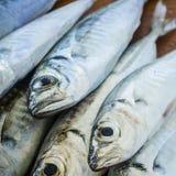 Surowa ryba nad naturalnym drewnianym tłem (scad) fotografia stock