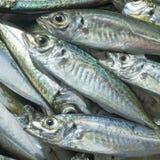 Surowa ryba nad naturalnym drewnianym tłem (scad) Zdjęcia Stock