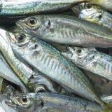 Surowa ryba nad naturalnym drewnianym tłem (scad) Obraz Stock