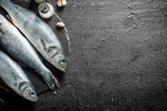 Surowa ryba z czosnków cloves i pikantność na drylujemy deskę fotografia royalty free