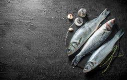 Surowa ryba z czosnków cloves i pikantność na drylujemy deskę zdjęcia stock