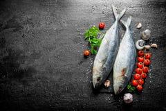 Surowa ryba z pikantność, pomidorami i ziele, obrazy royalty free