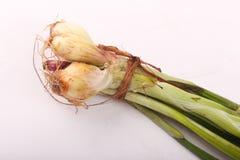 Surowa zielona cebula zdjęcie royalty free