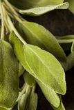 Surowa Zielona Organicznie mędrzec Zdjęcia Stock