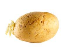 surowa ziemniaka Zdjęcia Royalty Free
