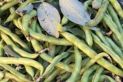 Surowe fasolki szparagowe fotografia royalty free