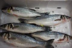 surowe ryby Zdjęcie Royalty Free
