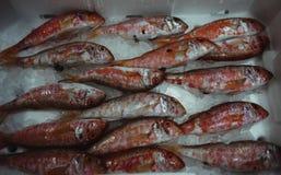 surowe ryby Obraz Royalty Free