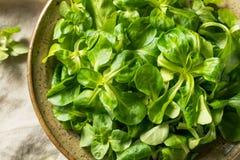Surowe Zielone Organicznie Mache różyczki obrazy stock