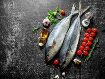 Surowej ryby tuńczyk z rozmarynami, pietruszką, pikantność i czosnkiem, obraz royalty free