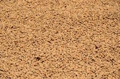 Surowi arachidy w skorupie umieszczającej suszyć na zewnątrz rolnika domu obrazy stock