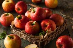 Surowi Czerwoni Fuji jabłka obraz stock