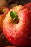 Surowi Czerwoni Fuji jabłka Fotografia Stock