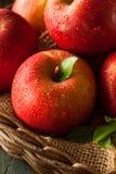 Surowi Czerwoni Fuji jabłka Obrazy Royalty Free