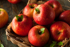 Surowi Czerwoni Fuji jabłka Obrazy Stock