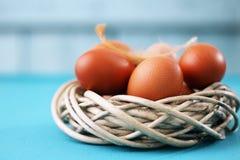 Surowi jajka w gniazdeczku Zdjęcia Stock