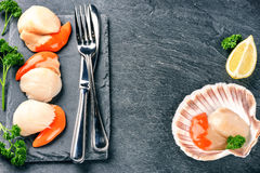 Surowi królowa przegrzebki w dennego jedzenia obiadowym położeniu knedle tła jedzenie mięsa bardzo wiele Obraz Stock