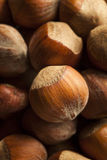 Surowi Organicznie Cali Hazelnuts Obrazy Stock