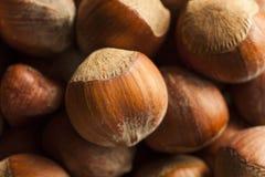Surowi Organicznie Cali Hazelnuts Obrazy Royalty Free