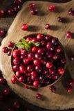 Surowi Organicznie Czerwoni Cranberries Fotografia Royalty Free