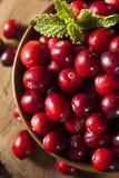 Surowi Organicznie Czerwoni Cranberries Zdjęcia Royalty Free