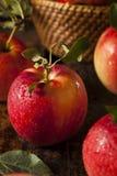Surowi Organicznie Czerwoni Galowi jabłka Fotografia Stock